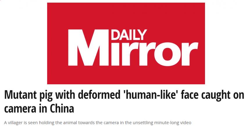 cerdo cara persona China