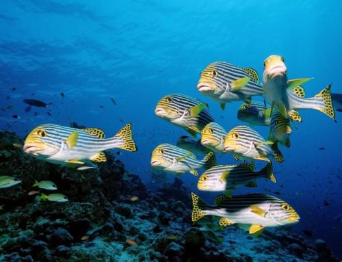 Día mundial de los océanos: Espectaculares FOTOS realizadas dentro del mar